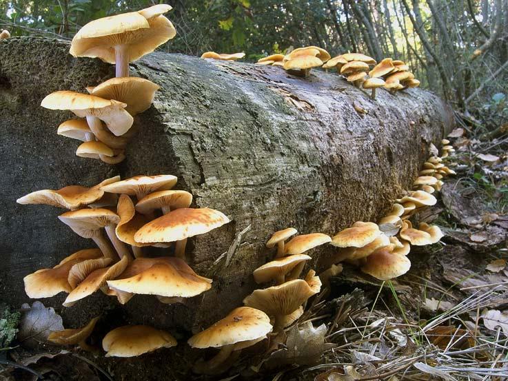 Quello che è le foglie di tempo su trattamento di un fungo di unghie